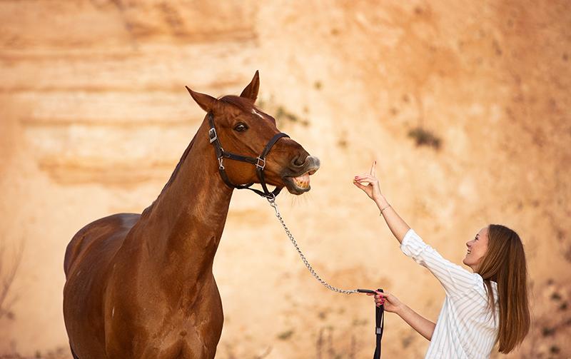 Pferd flehmt in der Sandgrube